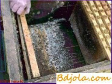 Basic cleaning of hives and disinfection of their hives