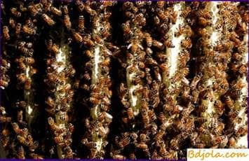Building a nest with bees