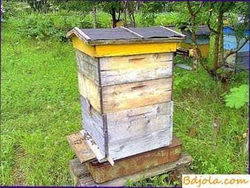 Control hive