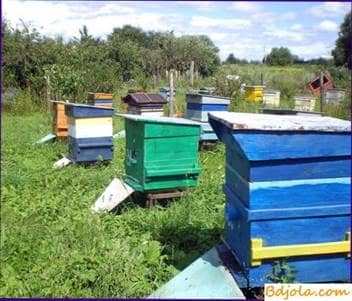 Summer work in the apiary