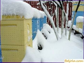 Type of hive for an apiary wintering at will