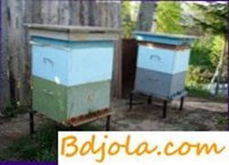 Double casing content of bees