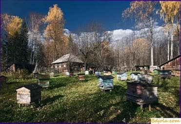 Autumn work in the apiary