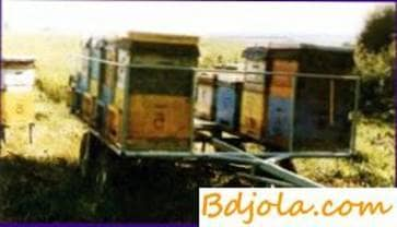 Transportation of bees for pollinating crops