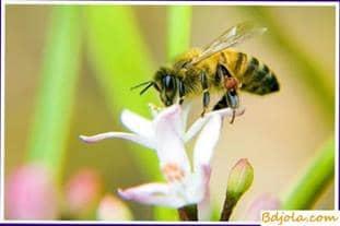 Association of bee colonies