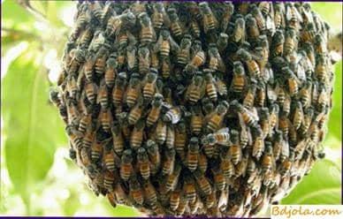 How to catch a swarm