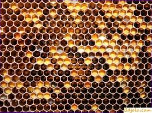 Mounting the honeycomb in the center of the frame