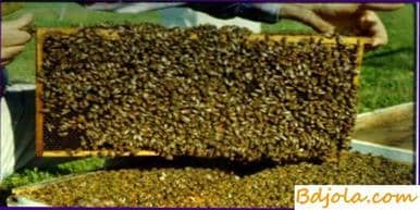 Replenishment of fodder stocks and top dressing of bees