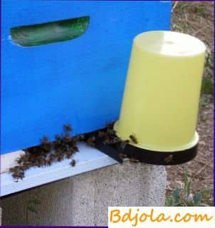 How to feed bees