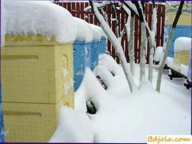 In winter, bees need peace