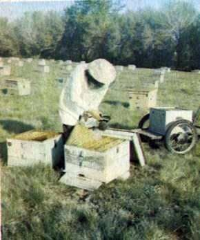 How to increase the apiary