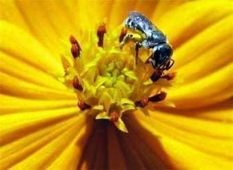 Single bees