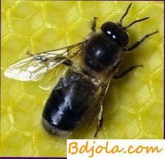 Dark forest bees