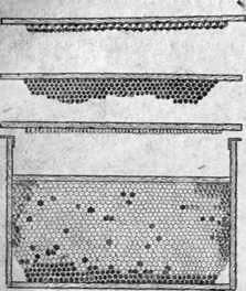 Methods of increasing the amount of wax from bee colonies