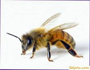 Bee venom with hypertension