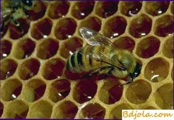 Antibacterial substances in bee honey
