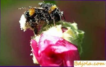 Carbohydrate dystrophy of bees
