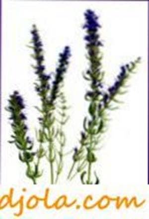 Hyssop honey