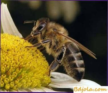 Salt toxicosis of bees