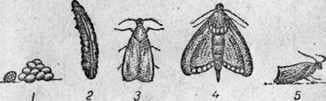 Enemies and pests of bees
