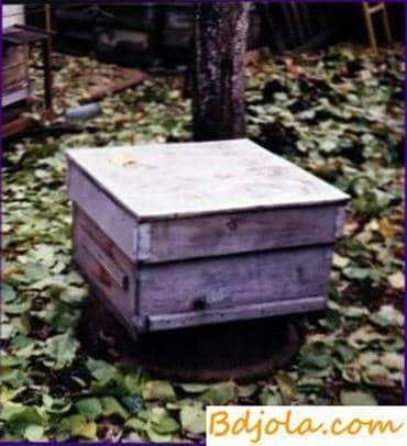 Double core hive