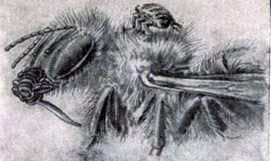 Bee louse
