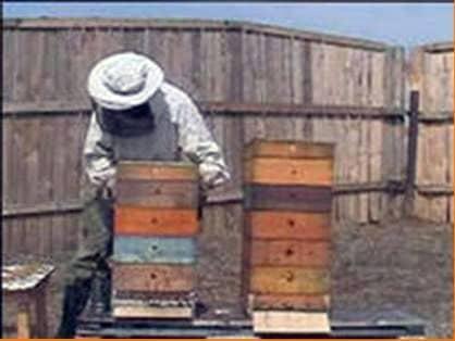"""Making a hive Boa"""""""