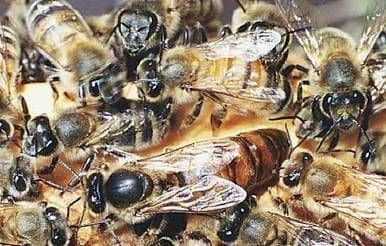 Life of a bee family