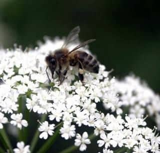 Influence of various conditions on the development of bee species