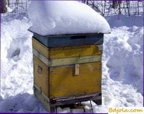 Getting honey in winter