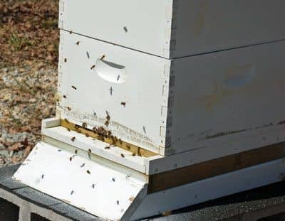 Ventilation for beehives
