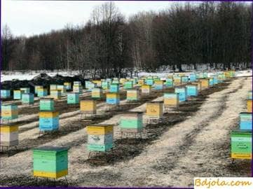 Successful wintering of bees