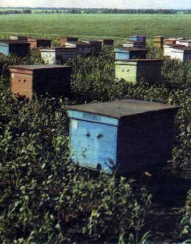 Apiary in September