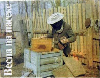 Spring in the Apiary