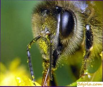 Fatigue of bees