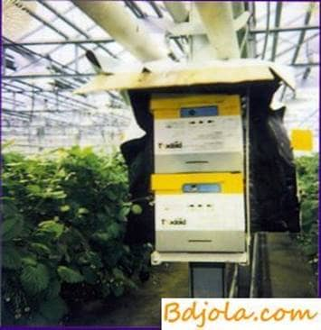 Beehive in greenhouses