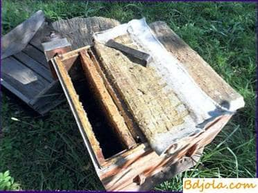 Autumn revision of bees and replenishment of feed stocks