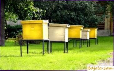 Size of the apiary in the greenhouse