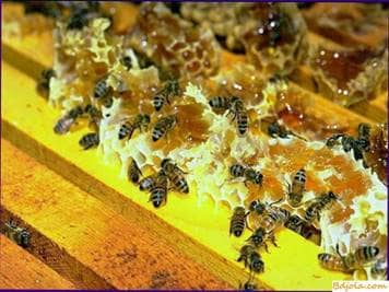 About greenhouse crops and bees