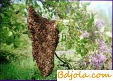 Artificial formation of new bee colonies
