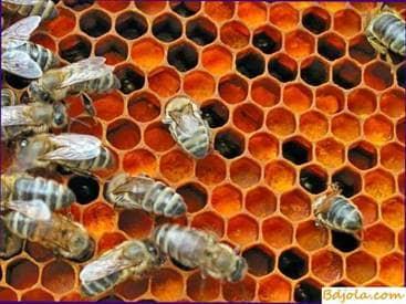 Using the honey