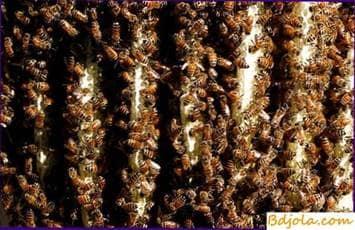 Construyendo un nido con abejas