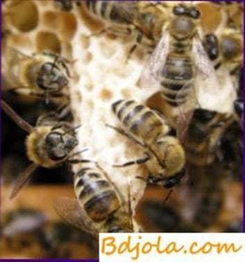 Procesamiento de abejas