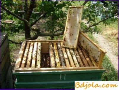 Contenido de las abejas en una colmena de dieciséis colmenas