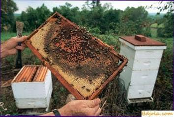 Cómo manejar las abejas en el trabajo