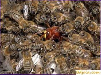 Luchando contra el ataque de las abejas