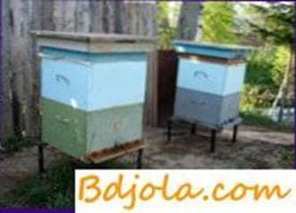 Contenido de doble envoltura de las abejas
