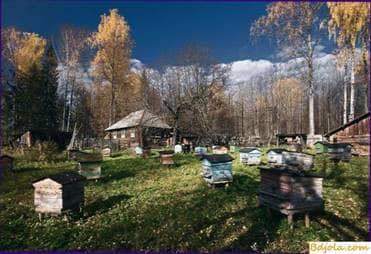 Trabajo de otoño en el apiario