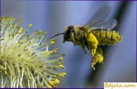 La primera compra de abejas
