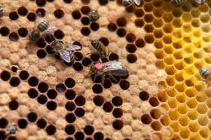 Micrófono para escuchar abejas